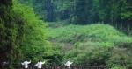 国开行1.5万亿支持生态养老田园综合体模式 - 农业