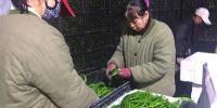 """贺兰蔬菜""""会说话""""热销北上广 - 农业"""